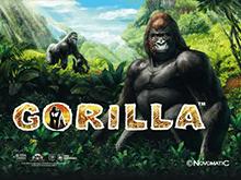 В клубе Вулкан Gorilla