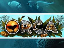 Orca игровые аппараты