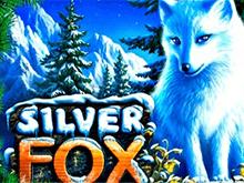 Silver Fox в клубе Вулкан